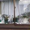 出窓を温室化してパイナップルの冬越しを図る