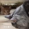 お布団ロール動画3本立て★