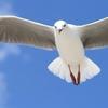 洗濯物に、鳥が近づかないようにする方法はある?