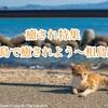 【癒し・猫】猫の島で癒されたい~九州・相島編~