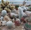 【自然溢れる『Botanical Garden』/Tag35】