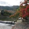 """京都・嵐山の紅葉は""""色づき始め""""。見頃は11月下旬?"""