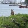 釧路を遊ぶ!阿寒湖温泉~アイヌコタンと庭を闊歩するエゾシカ