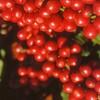 エカワ珈琲店版、珈琲入門【3】コーヒー生豆の精製と出荷
