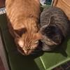 猫と暮らす私の災害への備え