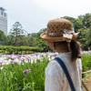 小石川後楽園 梅だけでなく花菖蒲も綺麗な都心のオアシス