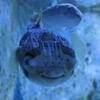 沖縄美ら海水族館で出会える癒し系