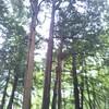 昆虫採集記 5月23日 円山公園