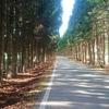 【自転車女子旅】全行程16kmのサイクリングに行ってきました!