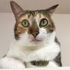 猫ダイエット記録 その1 秘密兵器キクイモで-200g