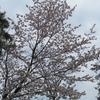えぃじーちゃんのぶらり旅ブログ~コロナで巣ごもり 北海道石狩市の春編 20210501