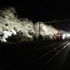 樹齢100年超の貴重なソメイヨシノがふりそそぐ分水駅