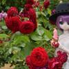 薔薇乙女達とリポD