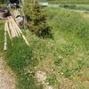 草刈り 白い蕾 Mowing the weeds