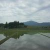 筑波山と花オクラの発芽