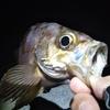 秋のフレンドファミリー釣り大会に参加してきた話 / 南予で投げ釣り&ぶっこみ釣り
