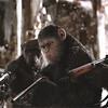 猿がヒトに堕ち、ヒトも猿に堕ちていく。『猿の惑星:聖戦記(グレート・ウォー)』