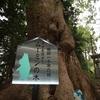 五所八幡宮 〜ムーミンの木〜
