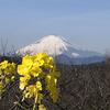 【シニア旅】大ショック。楽しみにしていた「富士芝桜まつり」行きを泣く泣く断念。