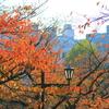 上野公園の紅葉③(桜の紅葉はそろそろ)