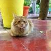 マラケシュ新市街観光!マジョレル庭園とスタバに行ってみた(世界の猫探し267匹目)
