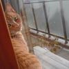 猫は平気なふりをする  〜 飼い主が一番のホームドクター