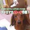 コンビニで200円以上の買い物をするならファミマでdカードを使おう!【わんこ多頭飼い主のちょっぴりおトクに生活】