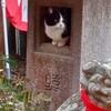 お稲荷さんと猫 善龍庵