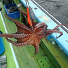 東京湾のタコエギ(蛸餌木)釣り入門@黒川本家っていうのを書きました