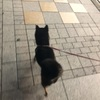 柴犬よんくろ、新宿散歩シリーズ⑦