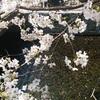 春の京都でフルーツタルトはいかが?