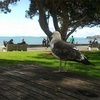 【NZワーホリ】ミッションベイは、オークランドのダウンタウンからバスで行けるビーチ☆