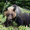 神奈川県熊出没目撃情報!今年はツキノワグマの当たり年!?丹沢のクマ