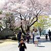 満開の桜のもと~入学式に憶う
