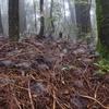 霧の中の森 どこまで行っても地面にクモの巣