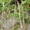 ヘビの抜け殻:くらがり渓谷自然観察会