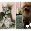 犬と猫のペットフードの選び方と雑学