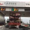 メキシコで見た動物運び用トラック-豚や鶏や馬がトラックで輸送される