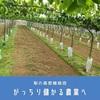 梨で儲かる農業実現へ~成長促進と高密植栽培の組み合わせ~