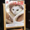 浅草橋のギャラリーで「ねこ休み展」!ネコさんの写真が撮りたくなる!