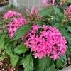 病院の花壇の花の秋うらら(あ)