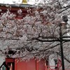 桜色 恵風香る 紀三井寺