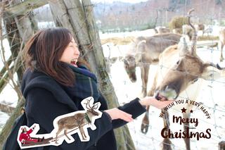 【冬の北海道を満喫】トナカイと遊んで、温泉でほっこり癒しの旅。道北・サロベツへ行ってみよう!!
