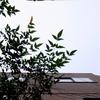 作曲工房 朝の天気 2017-10-03(火) くもり