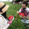 蟲ソムリエ 佐伯真二郎 「おいしい昆虫記」発売記念、昆虫と野草を食べる会レポート