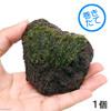 (水草)巻きたて ウィローモス 富士ノ溶岩石 Sサイズ(約7〜9cm)(無農薬)(1個) 北海道航空便要保温