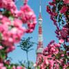 【PL filterで鮮やかに】東京タワーを新緑と薔薇で囲ってみた!