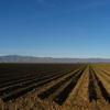 農業×旅行の可能性って?農園リゾートは成立するの?
