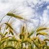 【健康】気になるなら『食物アレルギー検査』をオススメする。米も小麦もNGで何食えばいいのか戸惑った!