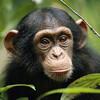 格ゲーに潜むチンパンジー
